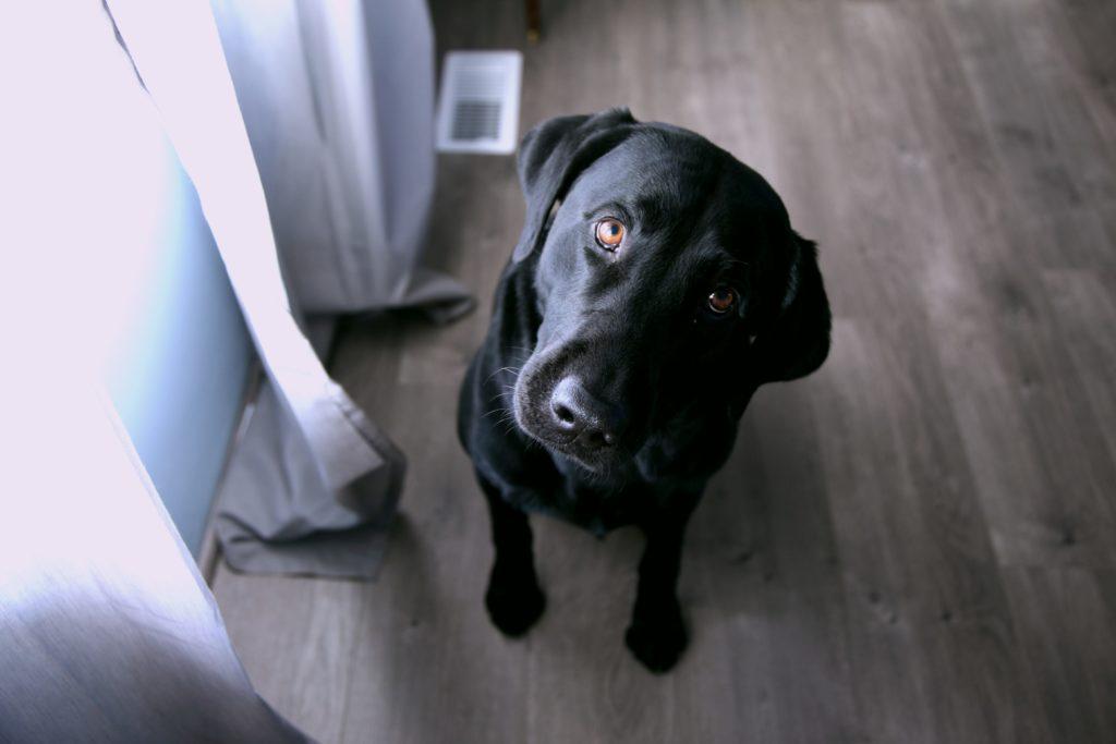 話をしっかり聞く犬